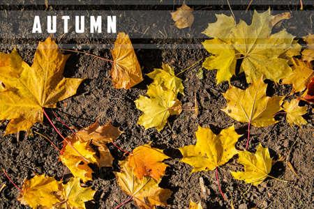 Yellow leaves on black ground. Zdjęcie Seryjne