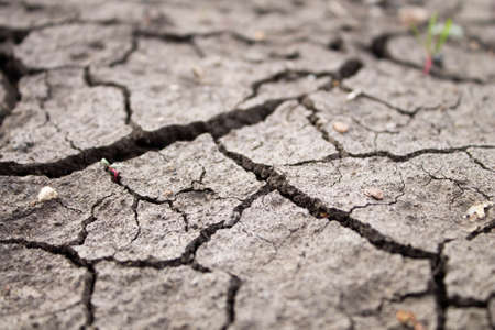 Deep cracks in the ground. The dry ground cracked. Black soil with deep splits. The consequences of an earthquake.