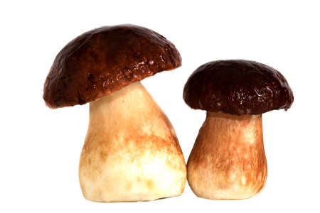 Cepes two pieces on a white background