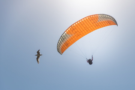 paraglider in the sky and bird