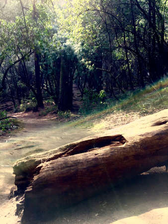 Fallen trunk Reklamní fotografie