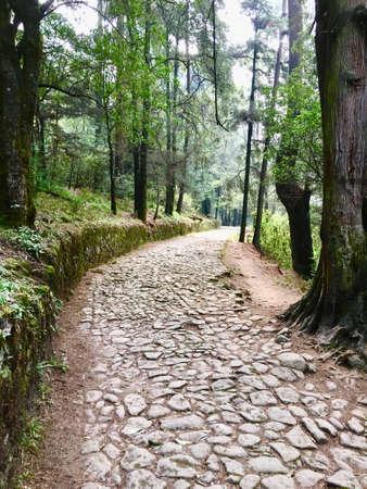Road of stones between trees in the woods