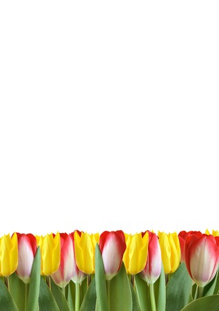 colorful tulips Stock Photo - 4577747