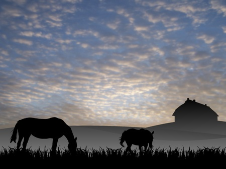 two horses on pasture at sunset Stock Photo - 9585391
