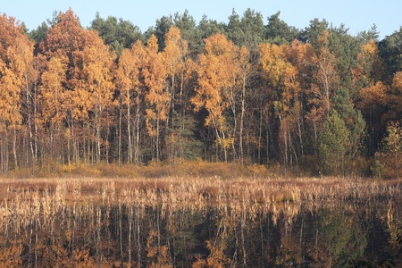 arbre: autumn forest