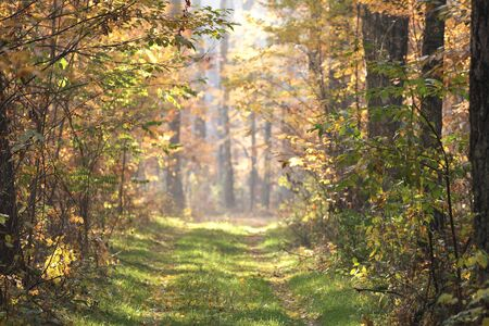 forestry road in autumn photo