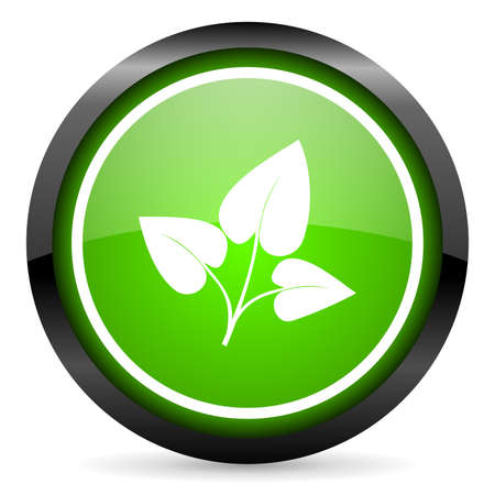 eco green glossy icon on white background photo