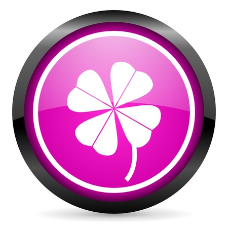 four-leaf clover violet glossy icon on white background photo