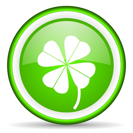four-leaf clover green glossy icon on white background photo