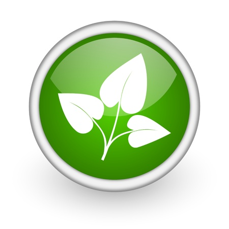 eco green circle glossy web icon on white background  photo