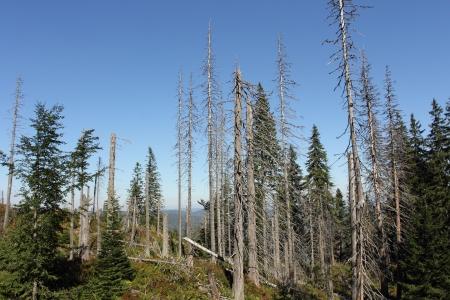 toten Wald