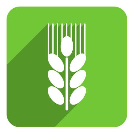 grain flat icon photo