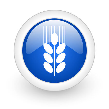 grain blue glossy icon on white background  photo
