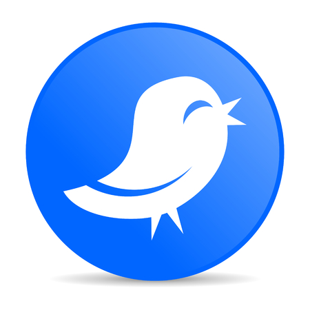 twitter internet blue icon  photo