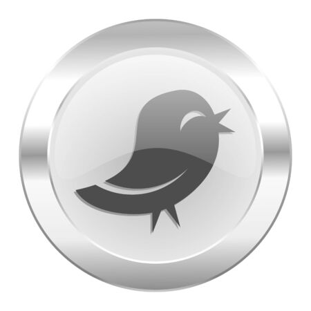 twitter chrome web icon isolated