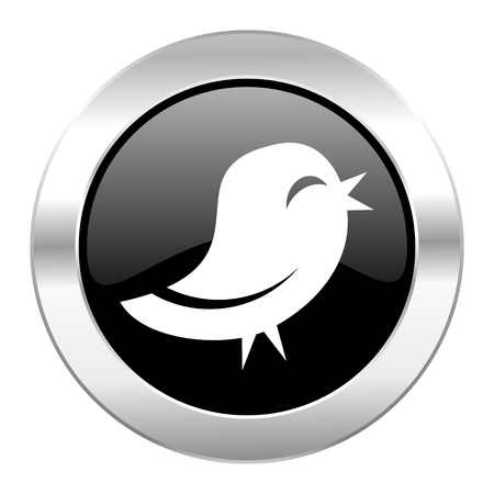 twitter black circle glossy chrome icon isolated