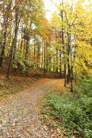 autumn in park photo