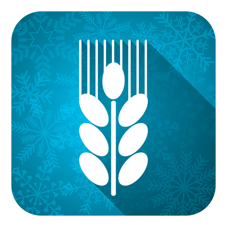 winter wheat: grain flat icon, christmas button, agriculture sign