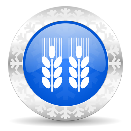 winter wheat: agricultural blue icon, christmas button