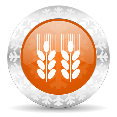 winter wheat: agricultural orange icon, christmas button
