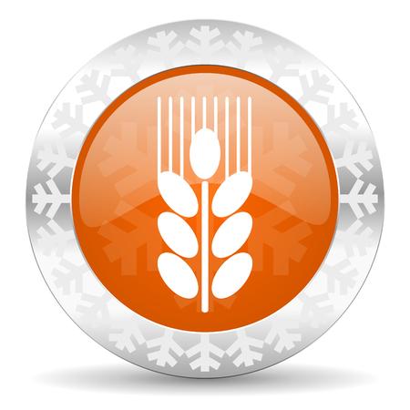 winter wheat: grain orange icon, christmas button, agriculture sign Stock Photo