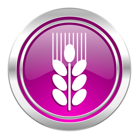 grain: grain violet icon agriculture sign Stock Photo