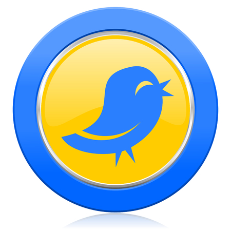 twitter: twitter blue yellow icon