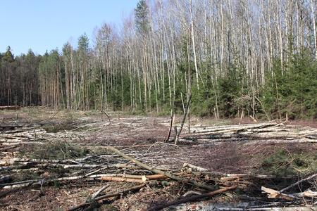 deforestacion: la deforestaci�n y la tala