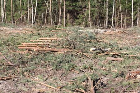 deforestation: deforestation and logging