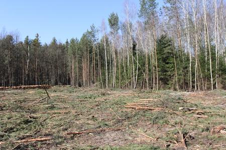 deforested: deforestation and logging