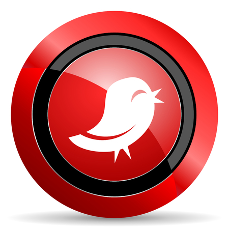 twitter red glossy web icon