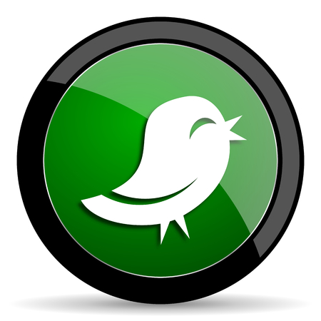 twitter: twitter green web glossy circle icon on white background