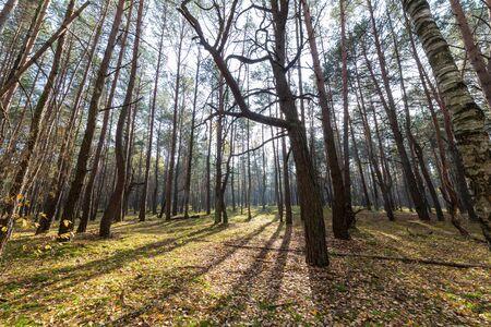 Wide angle photo forest autumn landscape