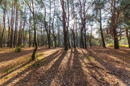 Autumn forest landscape, trees in park on sunny day