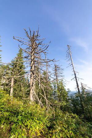 Dead trees in forest in summer on sunny day