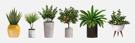 Set of vector realistic detailed house or office plant for interior design and decoration. Tropical and Mediterranean plant for interior decor of home or office.