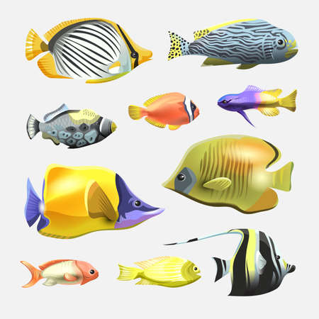 Sea beautiful fish collection isolated on white background. Flat design fish. Vector illustration, fishes. Fish collection. Aquarium modern flat fishes. Set of aquarium fishes.