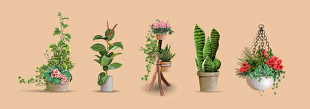 Set of vector realistic detailed house or office plant for interior design and decoration. Tropical and Mediterranean ornamental plant for interior decor of home or office. 向量圖像