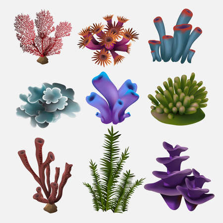 Coral and seaweed. Underwater flora, sea water seaweeds aquarium, kelp and corals. Ocean plants vector color set. Vector illustration.
