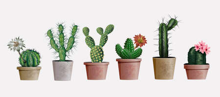 Collection of vector realistic detailed house or office plant cactus for interior design and decoration. Exotical and Popular indoor cacti with flowers for interior decor of home or office. 向量圖像