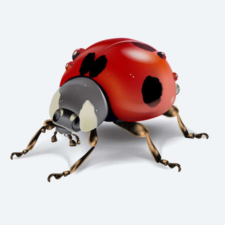 Realictic ladybird isolated on white background. Macro image of an insect. Vector illustration.