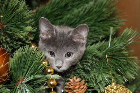climbed: Cute kitten climbed the tree with Christmas decor