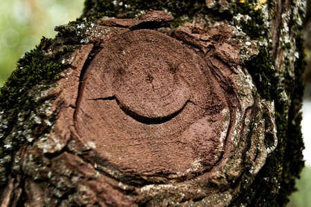 face in tree bark: funny face on the tree stump in a city Park