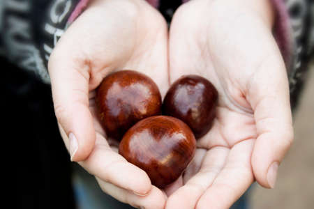 conkers: the fruits of chestnut in the hands of girls Stock Photo