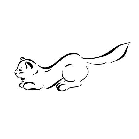 silueta de gato: Figura gatos líneas negras sobre un fondo transparente. Ilustración del vector.
