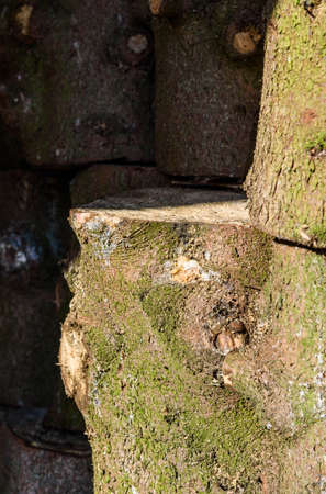 woodshed: stumps from trees stacked in the woodshed