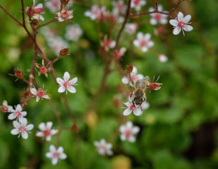small pink flowers on a green background Stock Photo
