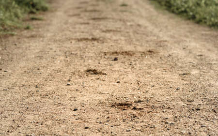 hoof: trace of the hoof of the horse on the sandy road in the woods Stock Photo