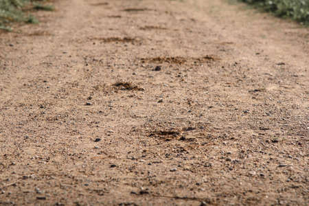 Close up Ttrace of the hoof of the horse on the sandy road in the woods