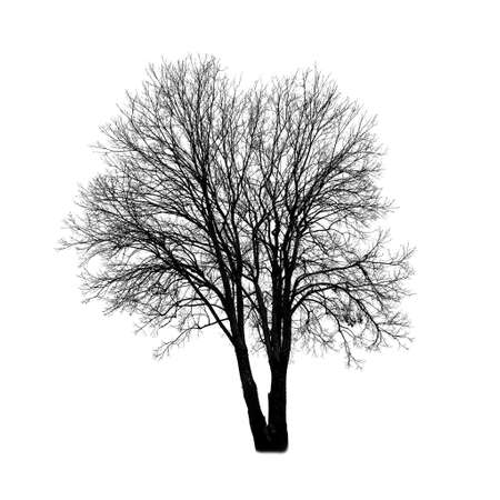 Square shot of cutout tree without leaves isolated on white background. Stockfoto